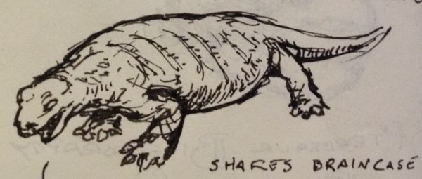 Pen doodle of a wide bodied, short-limbed reptile in left 3/4 view