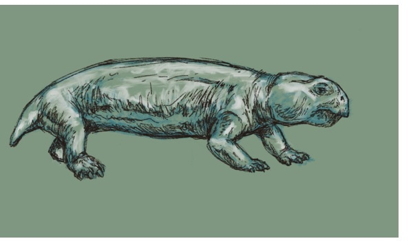 Sketch in black, white, and green of the small, long-bodied dicynodont Niassodon in right lateral view